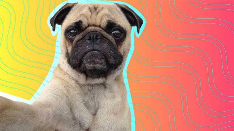 7 savjeta za uzimanje savršenog psa picka