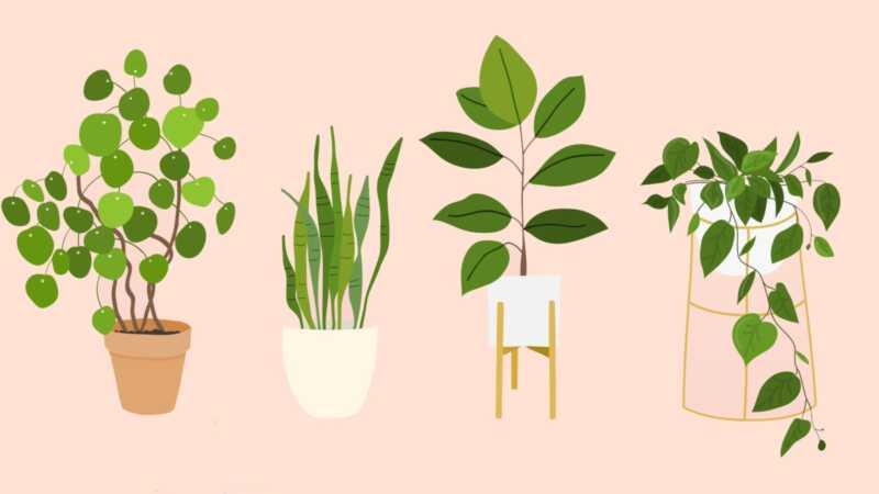 Najlepšie izbové rastliny, že v podstate niekto môže zostať nažive