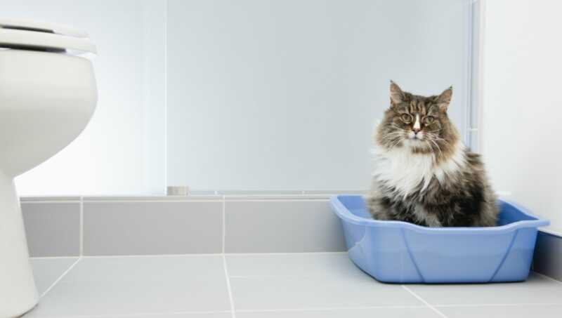 Vaša mačka koja spava u kutiji za smeće može biti znak ozbiljnog problema