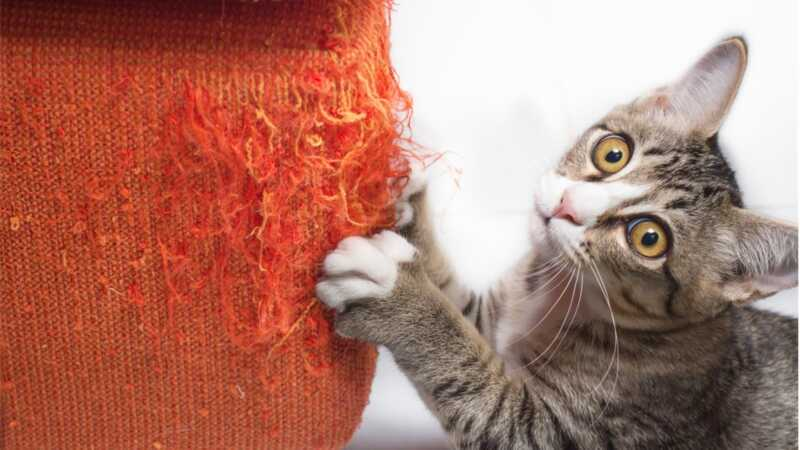 6 συμβουλές για την αποθήκευση των επίπλων, των νυχιών της γάτας σας και της λογικότητας όλων