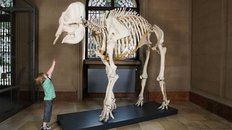 9 måder at få dit barn til at elske museer