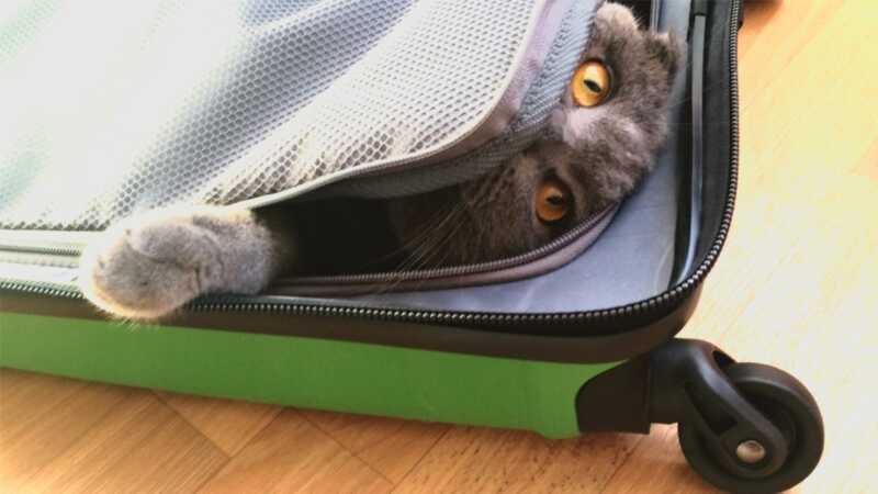 Можете ли вы действительно оставить свою кошку дома один, пока вы отправляетесь в отпуск?