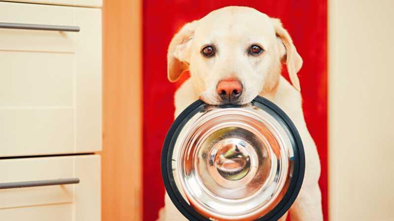Kako odabrati najbolju hranu za pse za svoje pse