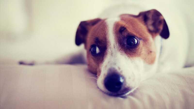 8 sätt att hantera din hunds separationsangst